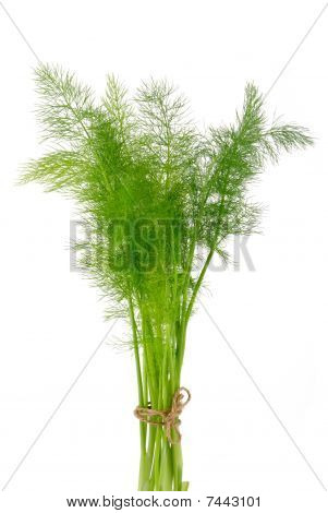Dill Bouquet Tied With String Isolated On White