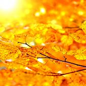 Autumn Foliage with Bright Leaves on the Tree Closeup poster