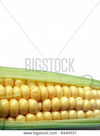 Corn - close up