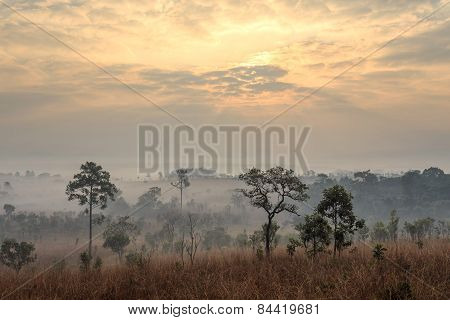 Tung Salang Luang, The Savanna Of Thailand. This Savanna Is The Only One In Thailand That Is Located