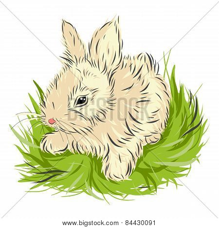 Easter rabbit sitting in green grass isolated on white