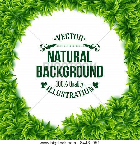 Natural frame of fresh green spring leaves