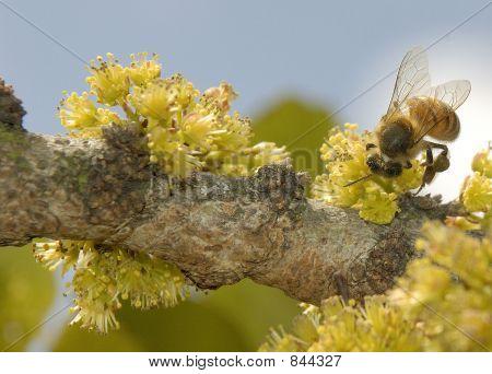 Bee on tree