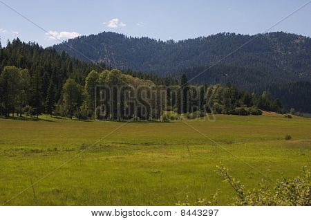 Country Meadow in the Summer