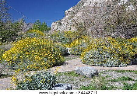 Colorful Desert Shrubs