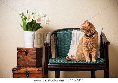 Home interior, cat