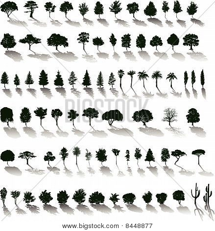 Vector trees with shadows