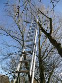ladder of aluminum at a bare tree for tree trimming blue sky gardening in fall or early spring poster