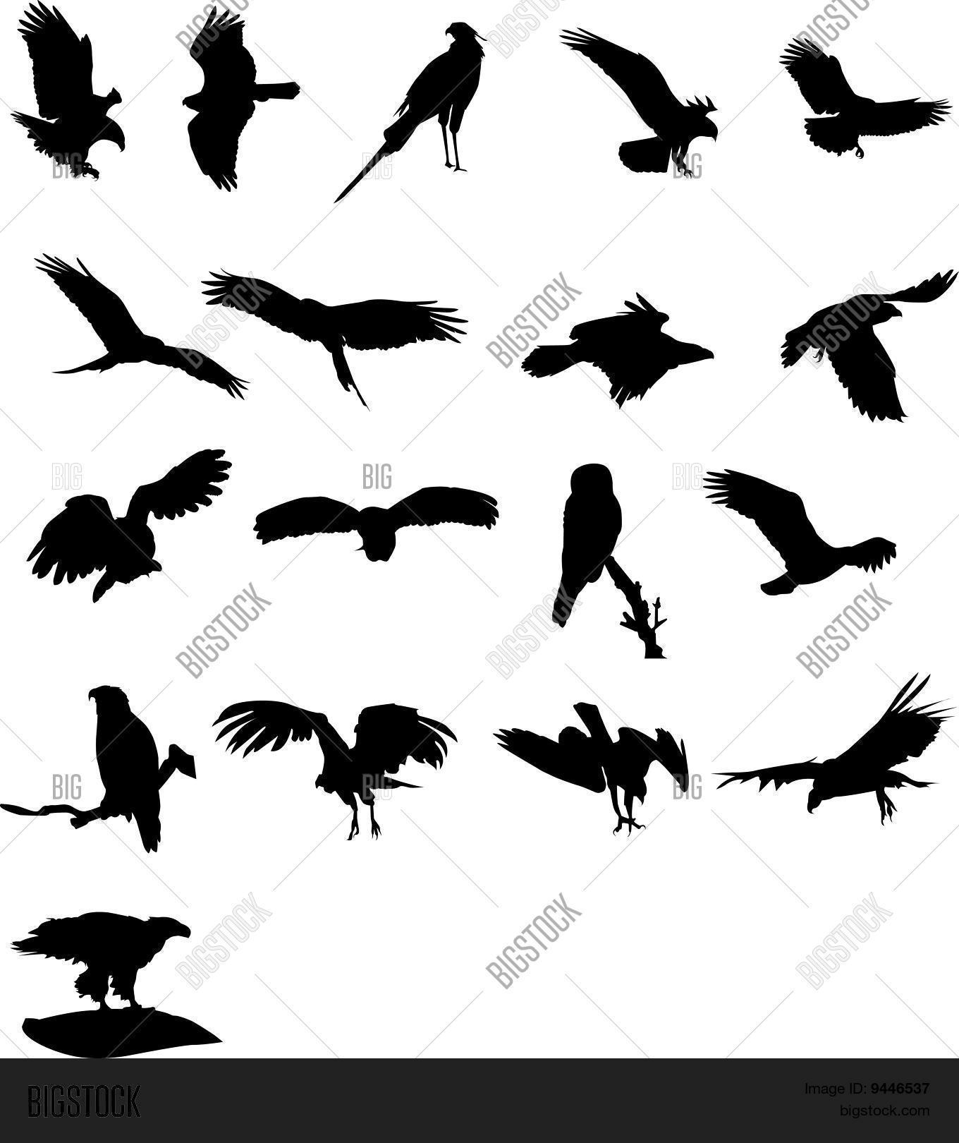 Birds Prey Vector Photo Free Trial Bigstock