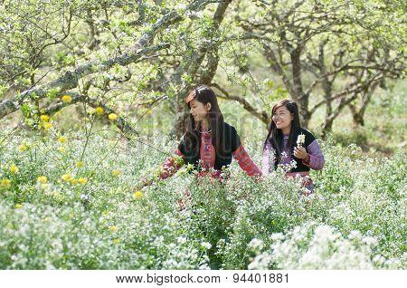 Two H'Mong ethnic girls in a flower garden in Mocchau, Vietnam