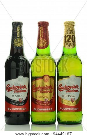 Budweiser lager beer isolated on white background