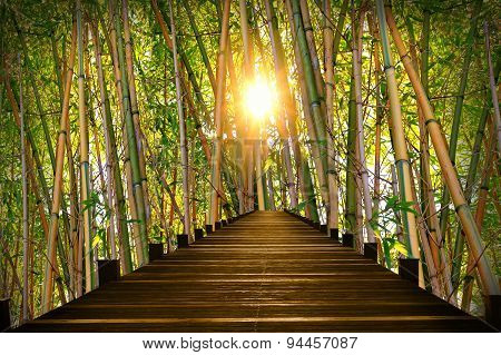 Wooden Boardwalk In Bamboo Forest