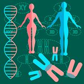 Set of people with genetics and DNA strands with two kinds of schemes of division of chromosomes. vector illustration poster
