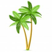 Vector illustration of tropical palm trees. Detailed portrayal. poster