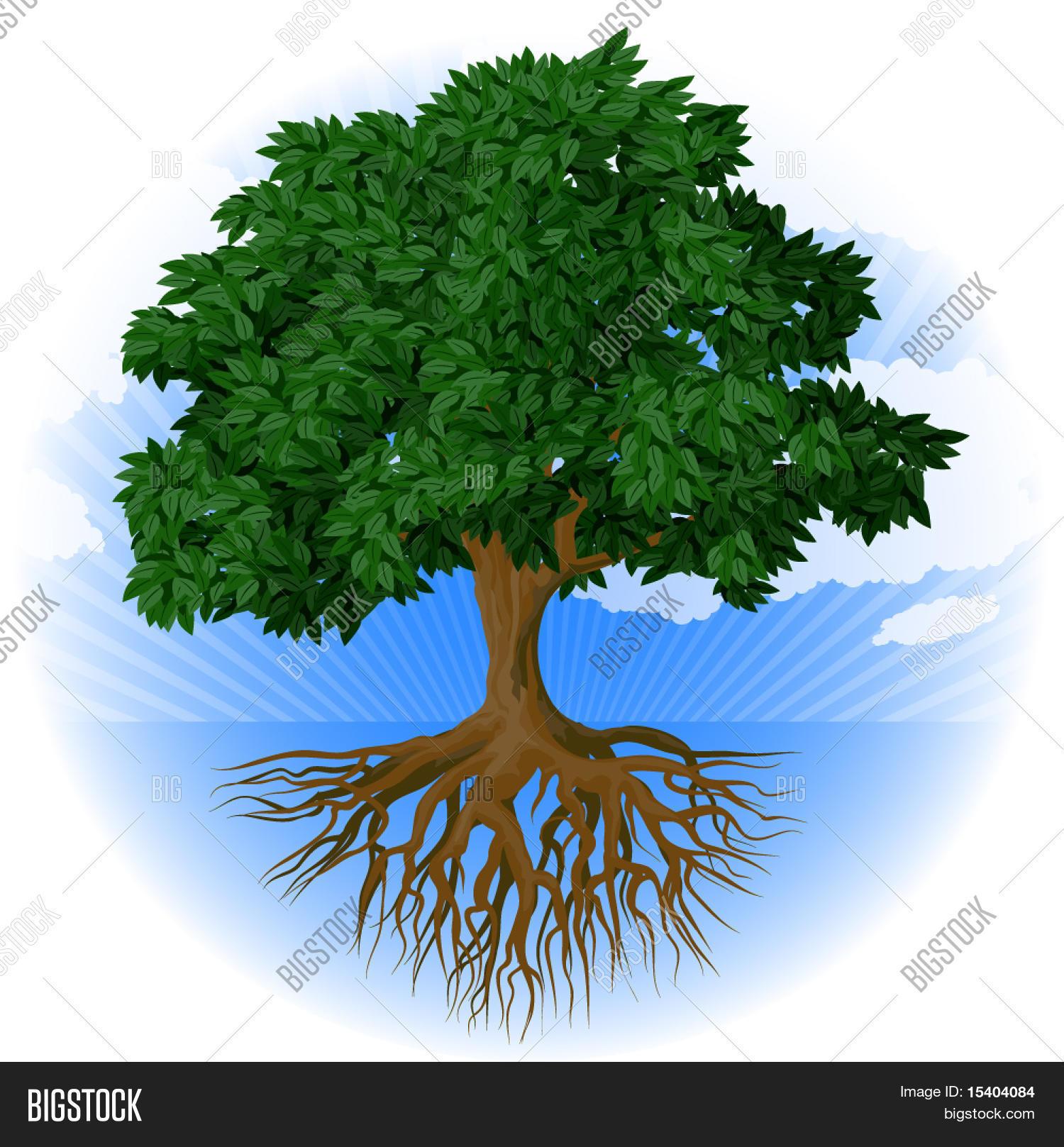 vector y foto Árbol con raíces prueba gratis bigstock