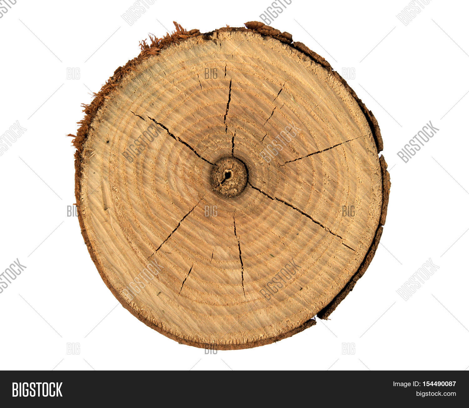 vectorstock free tree royalty rings vector image