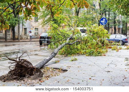 Odessa, Ukraine - October 12, 2016: Hurricane Christie. Heavy Rain And Gale - Force Gusts Of Wind Ca