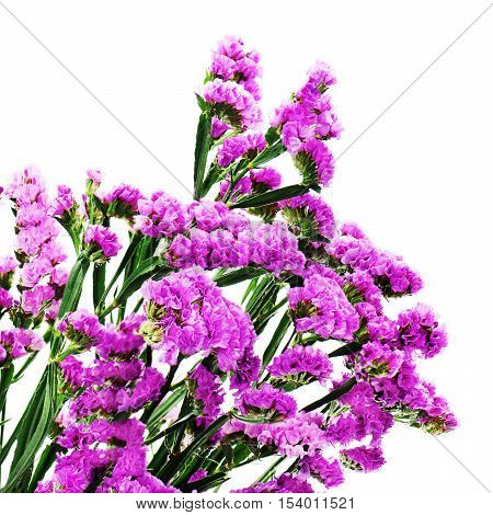 Bouquet from purple statice flowers isolated on white background. Closeup.