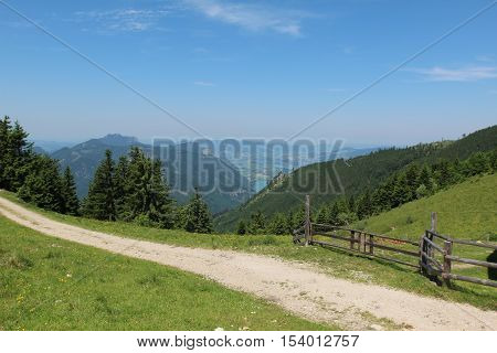 Schafberg, Austrian Alps / Colorful species in the area of Schafberg (Austria)