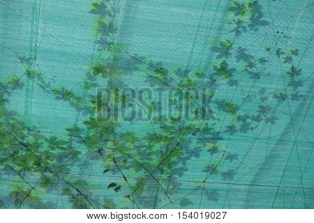 Twisted plant which seen through translucent ceiling. Ceiling is made from nylon mesh.