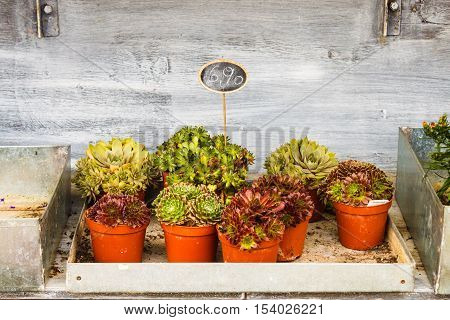 Various succulent plants for sale in a flower shop blackboard price tag.