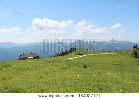 Schafberg, Austrian Alps / Colorful species in the area of Schafberg (Austria).