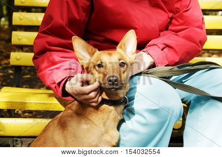 Stroking dog in scarf. Dog is walking in park. Owner squeeze and palm their dog. Domestication of scared and pooch dog.
