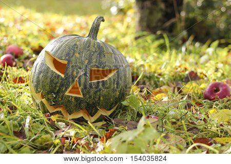 Carved pumpkin on a autum grass in apple garden.