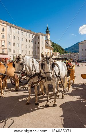 Salzburg Austria - August 23 2016: White horses waiting for a ride at the Residenzplatz in Salzburg.