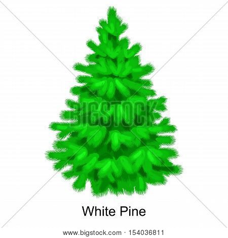 Christmas vector tree like white pine for New year celebration without holiday decoration, evergreen xmas plants.