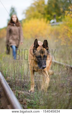 Attractive young woman walking with her dog German shepherd at autumn forest, near rail way - pet is in focus, outdoor