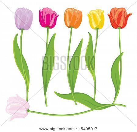 Color vector tulips set.
