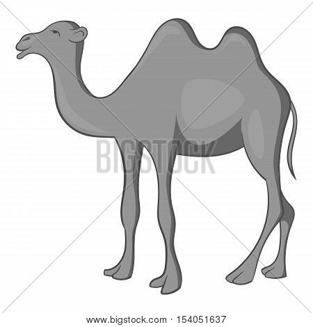 Camel icon. Gray monochrome illustration of camel vector icon for web design