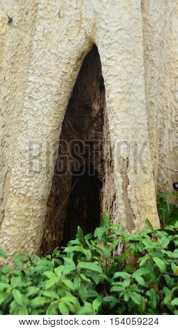 Tree hollow at the foot with green plant