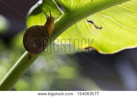 slug walking on the stem of a green leaf