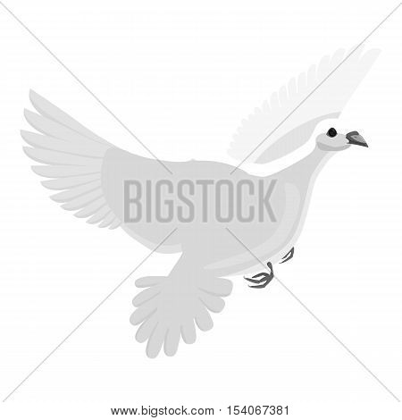 White pigeon icon. Gray monochrome illustration of white pigeon vector icon for web