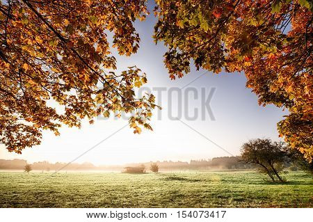 View though the overhanging golden autumn leaves to a misty sunrise parkland