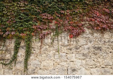 Creepers on an old wall in Girona, Catalonia, Spain