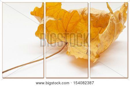 Autumn yellow leaf isolated on white background. Selective focus. Modular illustration