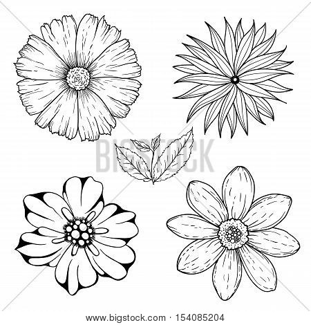 Vector set of hand drawn colorless flowers and leaf branch. Black white illustration isolated on white. Magic beautiful camomiles. Hand sketched doodle for coloring books, pages for adults