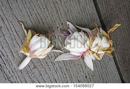 Fallen fuchsia flowers on a wooden surface