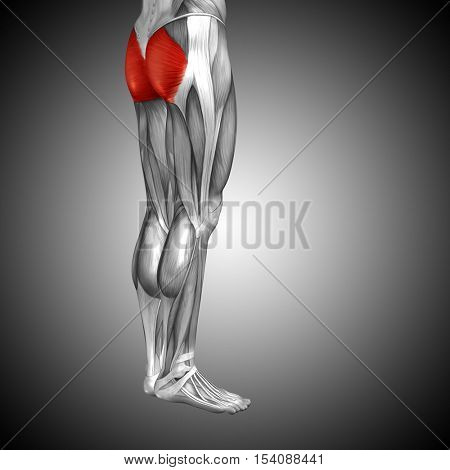 Concept or conceptual 3D illustration human upper leg anatomy or anatomical and muscle on gray background
