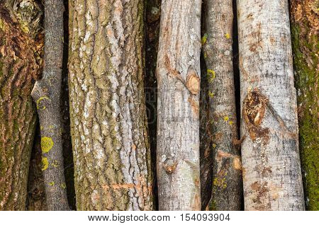 Environment nature and deforestation forest - felling of trees. The concept of a global problem. Background of cut tree trunks