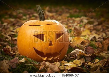 Ripe pumpkin for halloween on green grass wih autumn leaves background