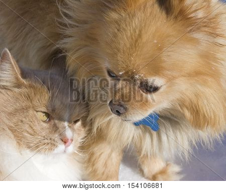 A dog and a cat snuggle on a cold wintry day.