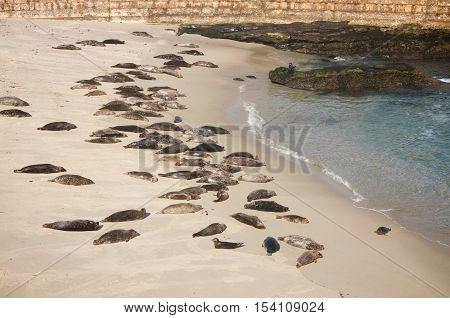 Children's Cove in La Jolla, California with sea lions on the sand