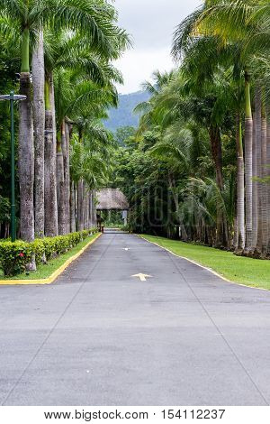 Tropical Driveway Lined With Palm Trees