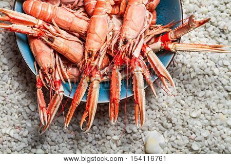 Fresh scampi served on the beach with white rocks