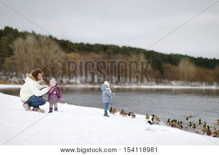 Feeding Ducks At Winter