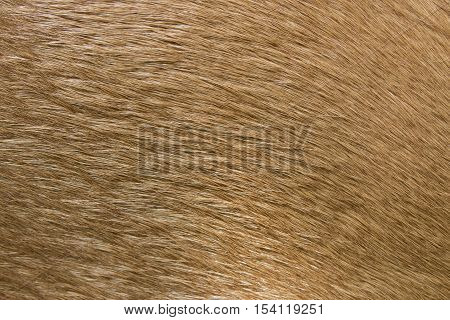Brown horse fur background. Fur skins of horses.